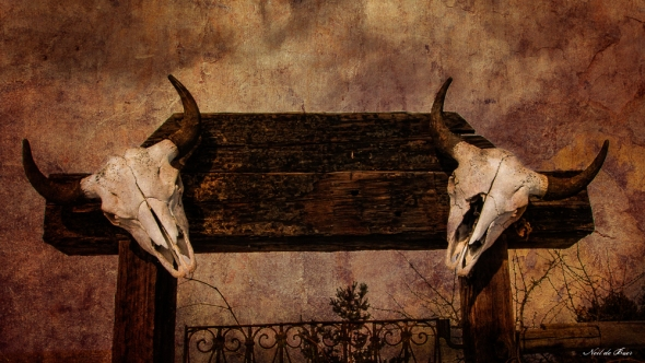 Cattle Skull Gate